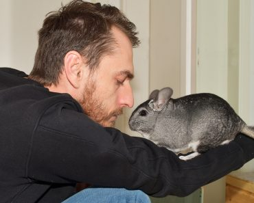 Chinchillas als Haustier