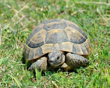 typische Krankheiten bei Schildkröten